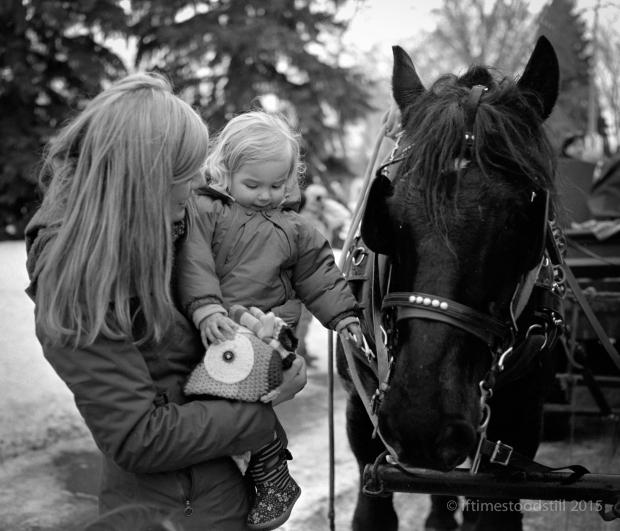 HorseyNewYr-1