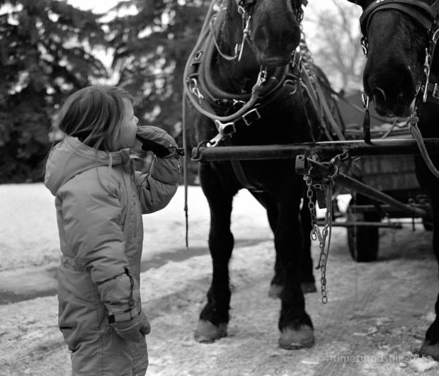 HorseyNewYr-2