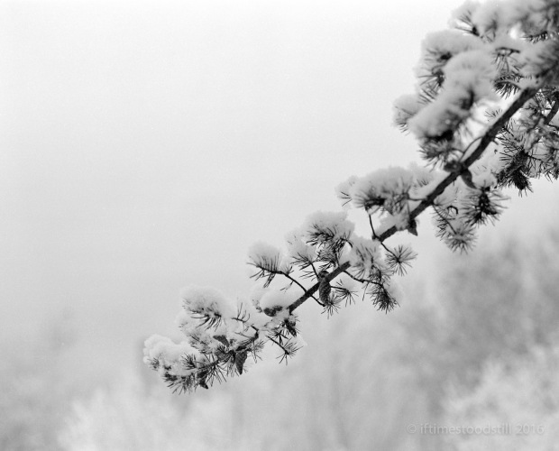 Winterscapes-1