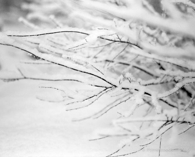 Winterscapes-2