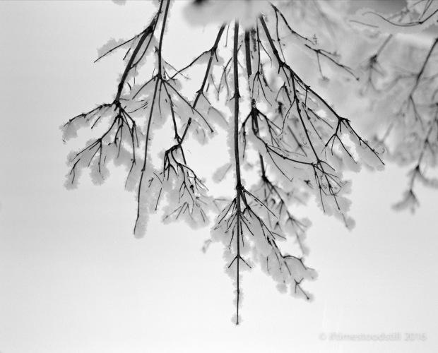 Winterscapes-3