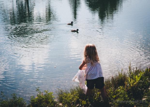 Ducklings-2