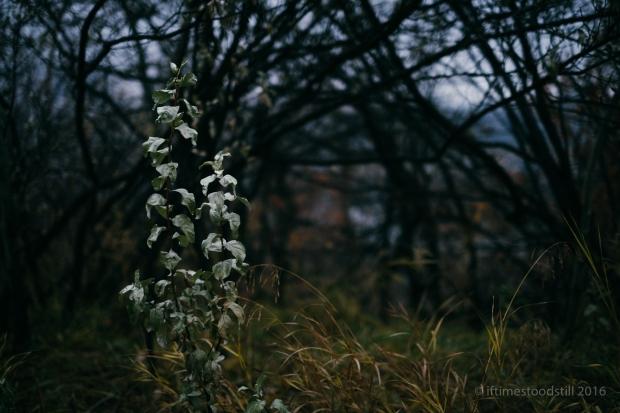 scenery-10