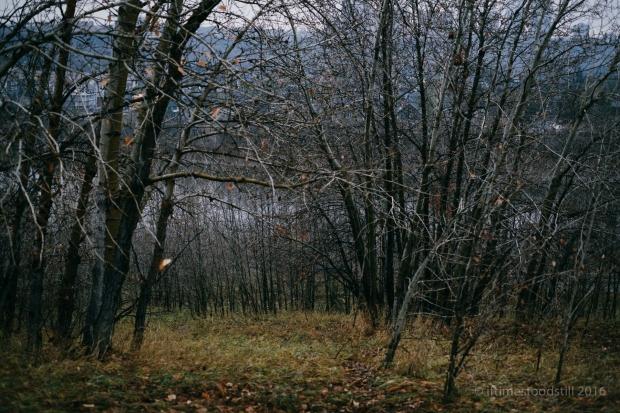 scenery-14
